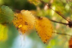 Herbst im Groschenwasser