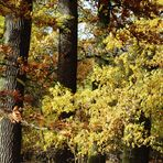 Herbst im Hain....