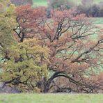 Herbst im  Hain 6