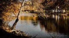 Herbst im Hain