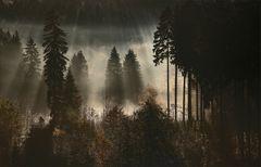 * Herbst im Harz * **