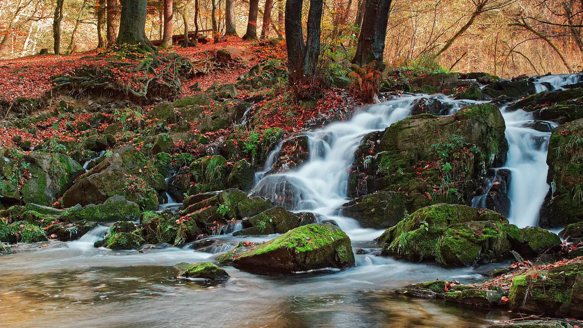 Herbst im Harz - Selkefall