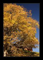 Herbst im Haslital