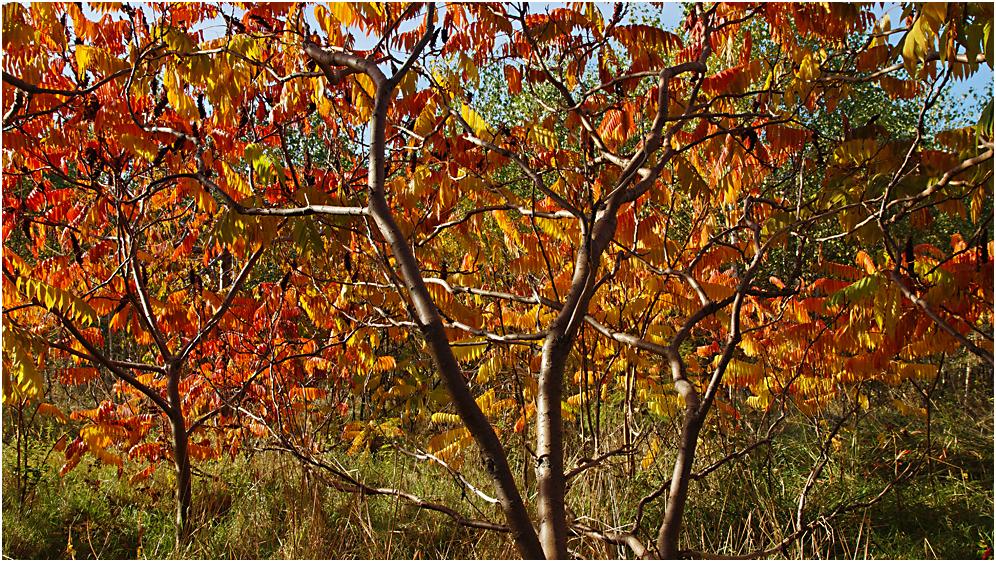 Herbst im Havelland, 19.10.12 – 01
