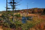 Herbst im Hochmoor