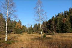 Herbst im Hochmoor ...