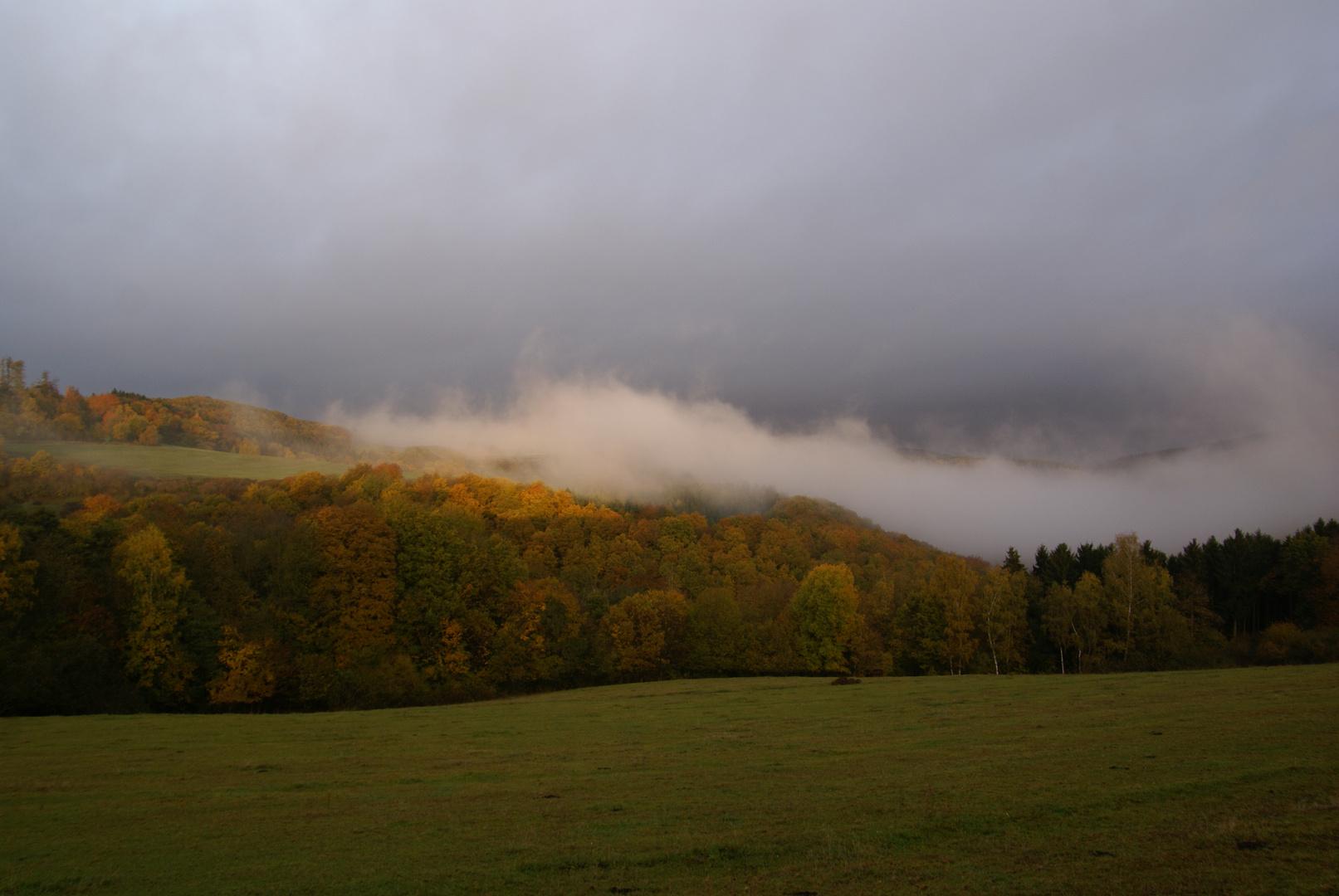 Herbst im Hochwald