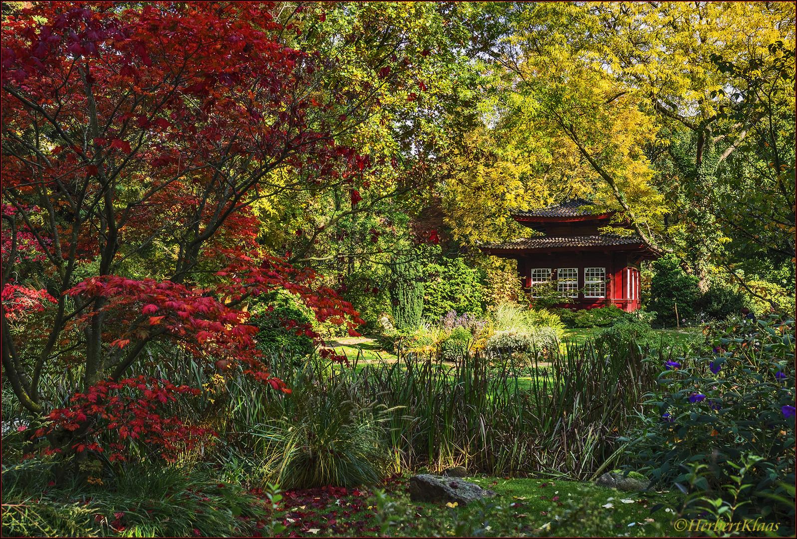 herbst im japanischen garten foto bild natur herbst landschaft bilder auf fotocommunity. Black Bedroom Furniture Sets. Home Design Ideas