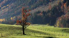 Herbst im Kandertal
