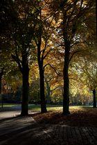 Herbst im Kantpark 02