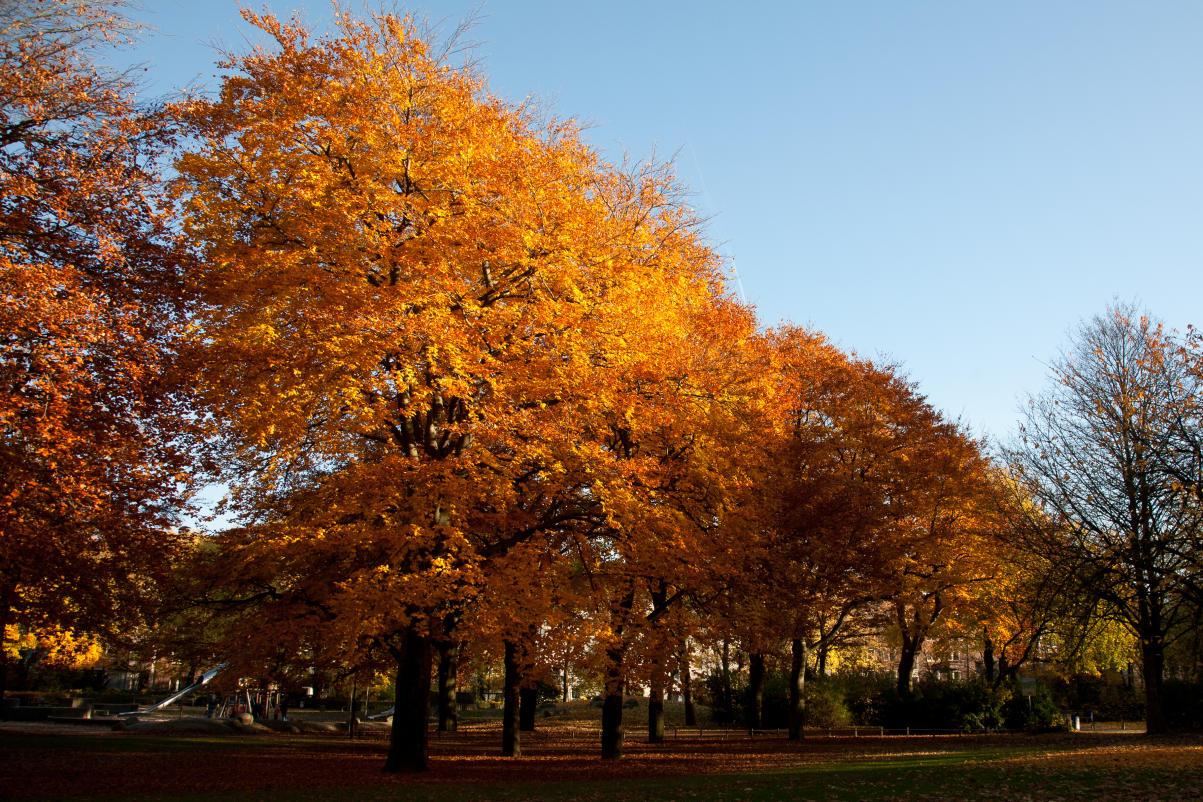 Herbst im Kantpark 03