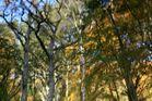 Herbst im Kaskadenteich