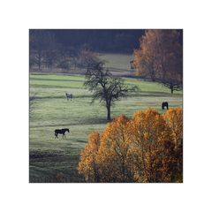 Herbst im Kinzigtal