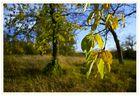 Herbst im Kirschbaum