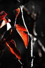 Herbst im Klostergarten von Seligenstadt