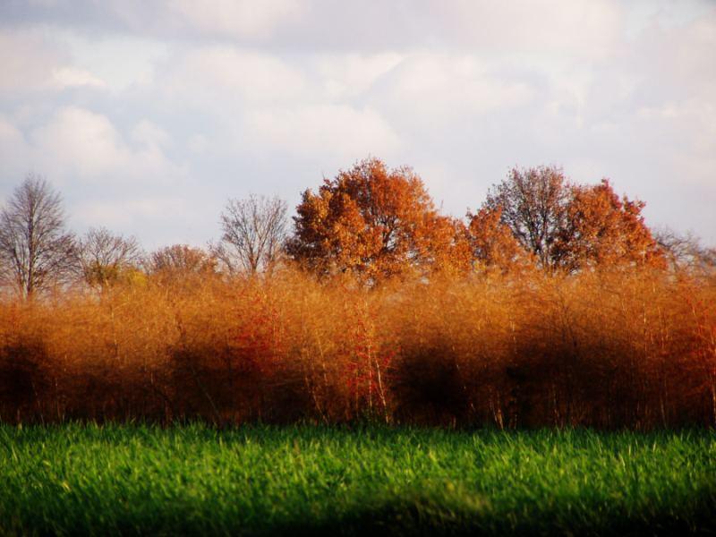 Herbst im Knobi...