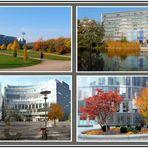 Herbst im Kölner Mediapark