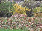 Herbst im Kölner Zoo