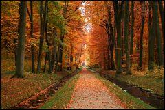 Herbst im Ludwigsluster Park
