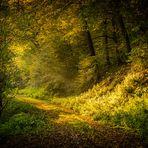 Herbst im Moorbachtal 3