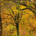Herbst im Nationalpark Eifel - Fototour Indian Summer