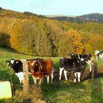 Herbst im Oberbergischen 4