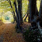 Herbst im Oberbergischen 5