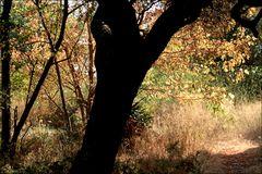 Herbst im Olivenhain