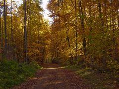 Herbst im Osterholz