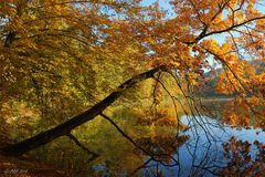 Herbst im Park - 1