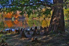 Herbst im Park - 2