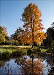 Herbst im Park von Schloss Dyck (2)