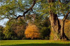 Herbst im Park von Schloss Dyck (3)