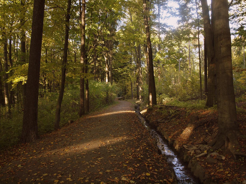 "Herbst im ""Pöhlberg-Wald"""