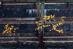 Herbst im Revier