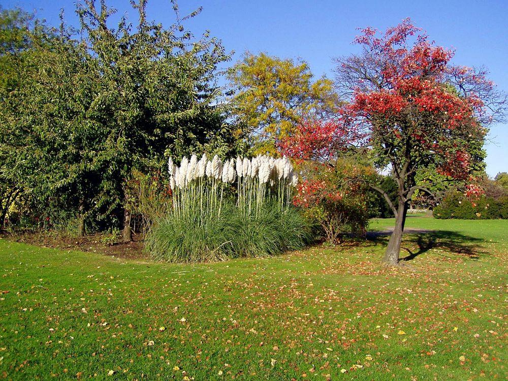 herbst im Rheinpark
