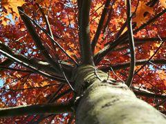 Herbst im Rot