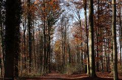 Herbst im Ruhewald