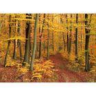 Herbst im Saarkohlenwald