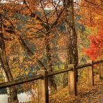 Herbst im Sauerland (20)