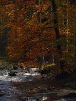 Herbst im Schwarzwassertal