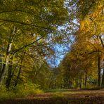 Herbst im Siebentischwald