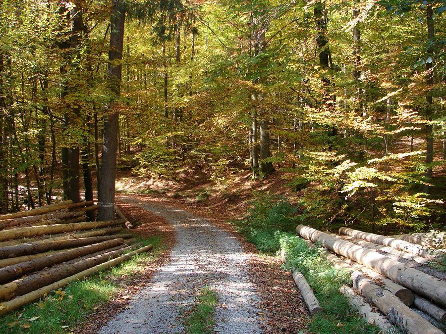 Herbst im Spessart
