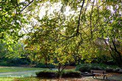 Herbst im Stadtgarten Neuss - ein Sonnenplatz zum Genießen