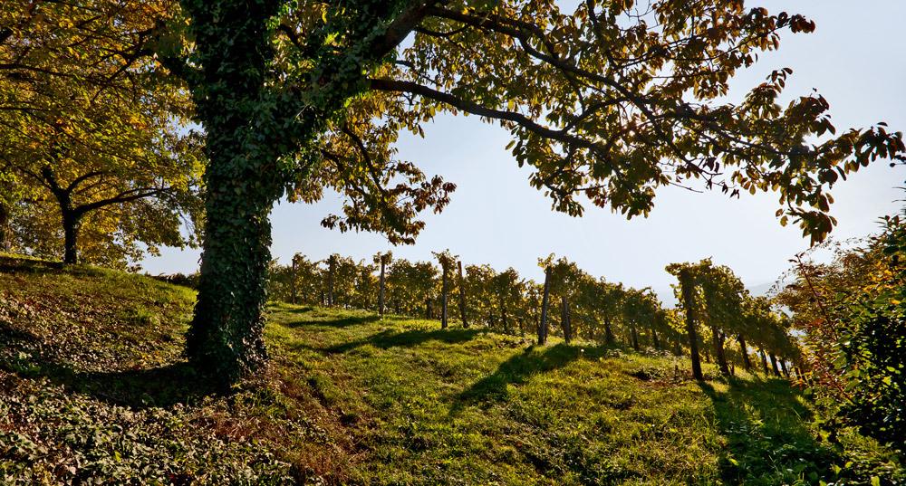 Herbst im steirischen Weinland!