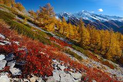 Herbst im Streiflicht