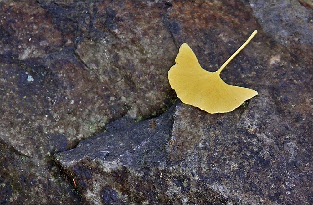 Herbst im Tertiär