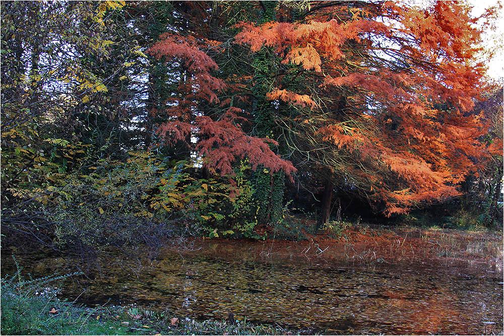 Herbst im Tertiärgarten