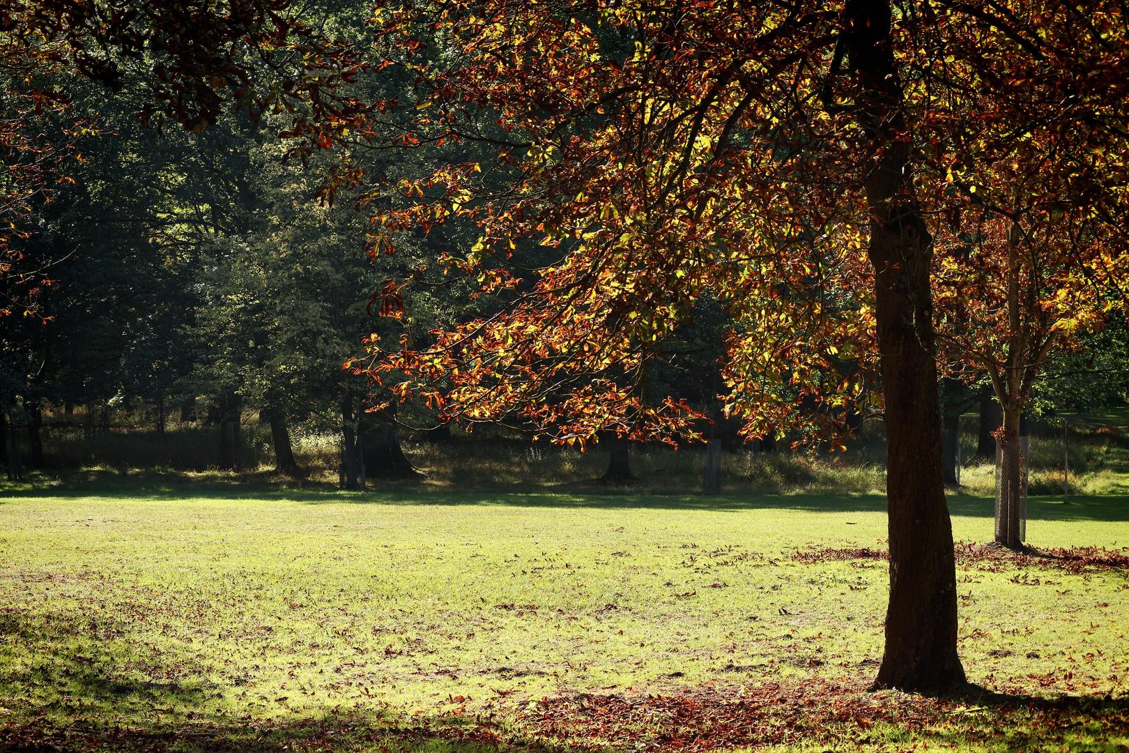 Herbst im Tiergarten #4