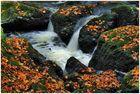Herbst im Triebtal (2)